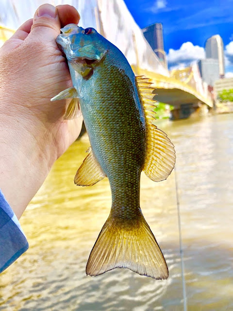Pittsburgh fishing for smallmouth bass under Rachel Carson Bridge