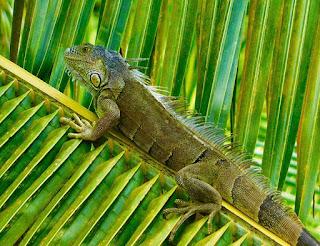 flora, fauna, iguanas, #payabay, #payabayresort, paya bay resort, nature,