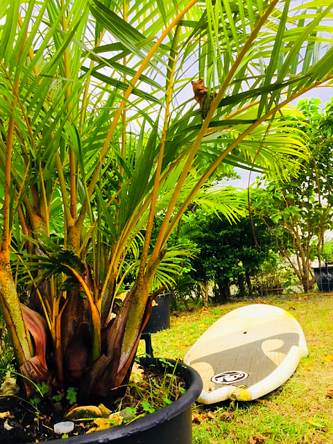 Jamaica Music&Cafe〜🌴K.G/adventure😁 今日は朝から曇りです。 SUPボードのメンテナンスしようかな〜   南の島で最高の思い出を〜 西表島 KEN GUIDE www.kenguide.info  #西表島 #石垣島旅行 #石垣島 #西表島旅行 #離島 #旅行 #海 #ビーチ #海好き #天気 #天気予報 #女子旅 #家族旅行 #アウトドア #sup #サーフィン #ヨット #カタマランセイル #パナリ島 #Yacht #catamaran #sailing #sail #ガイド #求人情報 #求人 #バイト募集中