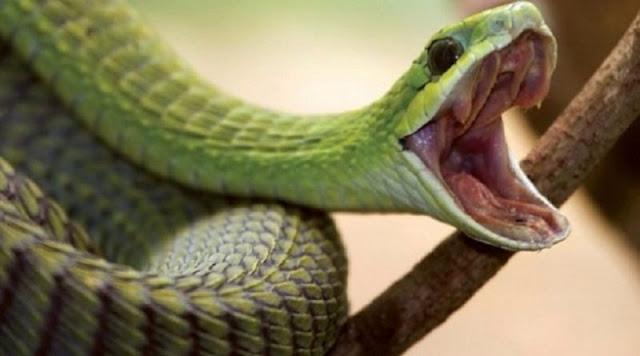 """Φίδια στον κόρφο μας οι """"ανταποκριτές"""" της Τουρκίας στη Θράκη…"""