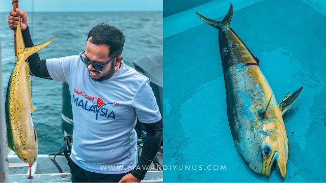 ikan belitung di pulau tioman