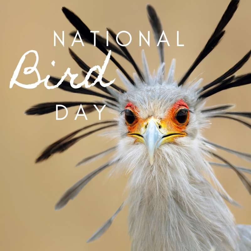 National Bird Day Wishes