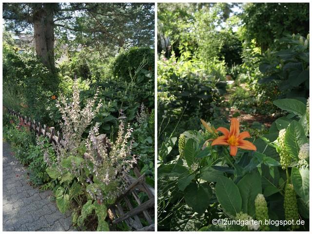 Muskateller-Salbei, Taglilie und Kermesbeere blühen im Juni