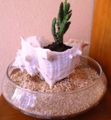 2 cara membuat keong jadi pot tanaman
