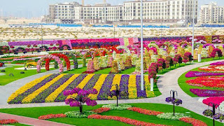 the-worlds-largest-natural-flower-garden-dubia-miracle-garden_dubai-miracle-garden