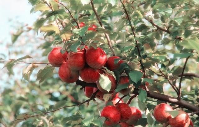 A borsodiak háromszor adták el ugyanazt az  andornaktályai gyümölcsöst