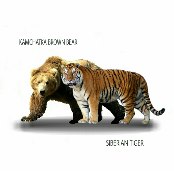 Abe's Animals: Size difference between Kamchatka brown ...