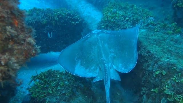R.B.M Artificial Reef