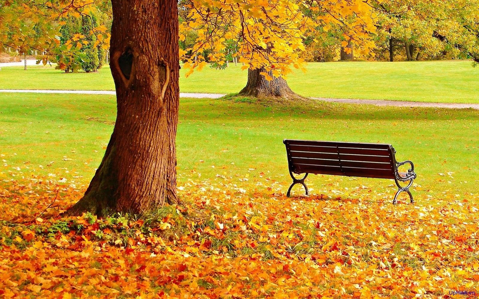hình nền phong cảnh mùa thu lá vàng rơi