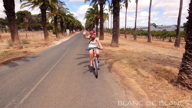 Pyörällä Barossa Valleyssä - www.blancdeblancs.fi