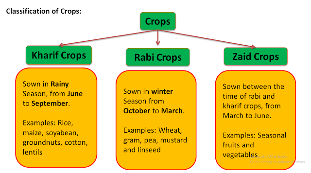 Kharif Crops, Rabi Crops and Zaid Crop, NCERT Class 8th Science, www.educationphile.com