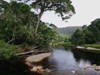 5 Misteri Di Sekitar Hutan Yang Belum Pernah Anda Ketahui