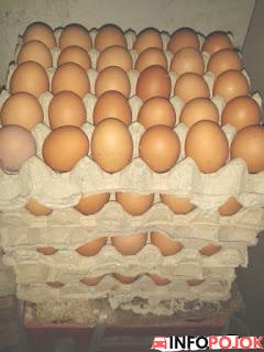 Tips Memilih Agen Telur Ayam