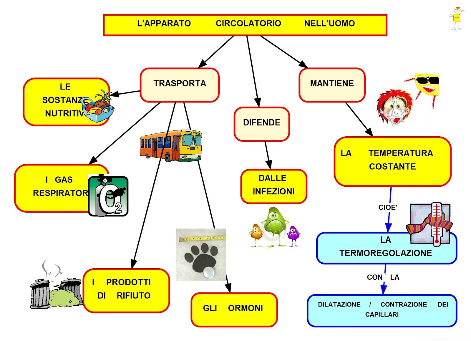 Malattie del sangue e dell'apparato circolatorio