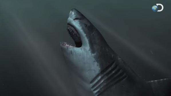 650 Gambar Ikan Hiu Raksasa HD
