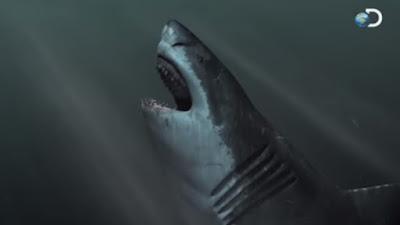 gambar megalodon shark buka mulut