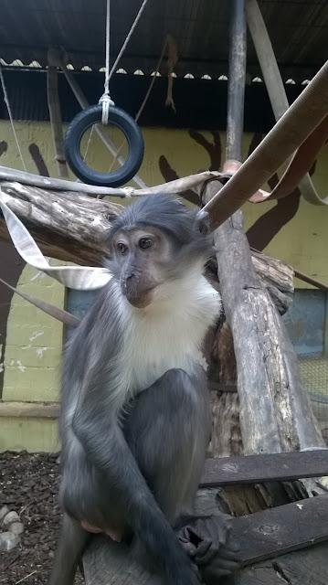 Зоопарк Испания Херес де ла Фронтера