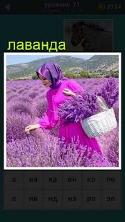 женщина в розовом с корзиной собирает лаванду в поле 21 уровень 667 слов