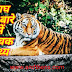 Information About Tiger In Hindi - बाघ के बारे में Top 34 Amazing तथ्य।