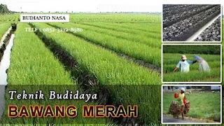 AGEN NASA DI Setia Bakti Aceh Jaya - TELF 082334020868