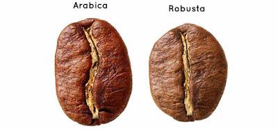 kopi arabica dan robusta