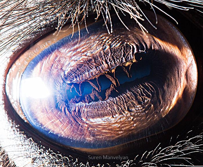 Camel Eyes Close Up Photograph