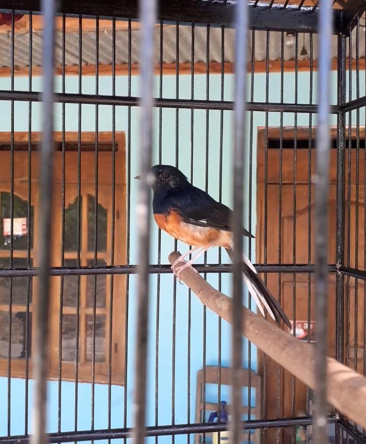 Zona Burung
