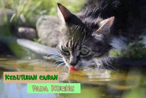 Kucing Minum Terus Menerus
