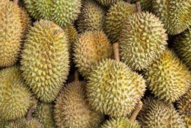 Inilah 7 Cara Memilih Durian yang Enak, Sudah Terbukti