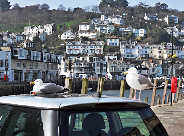 Seagulls by River Looe at Looe, Cornwall