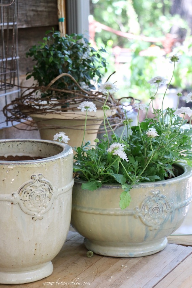 New French Garden Urns in 2 sizes and 2 shapes on the potting bench