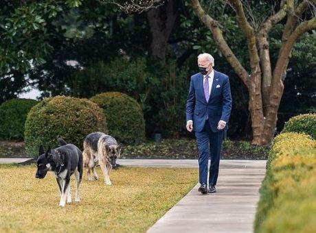 ΗΠΑ: Εκτός του Λευκού Οίκου τα σκυλιά του Μπάιντεν