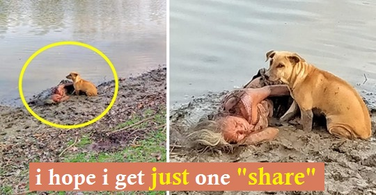 Stray dog is seen guarding elderly woman lying in the mud by a river—the dogs care about her safety