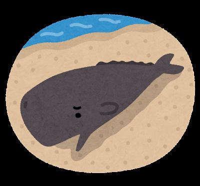 座礁したクジラのイラスト