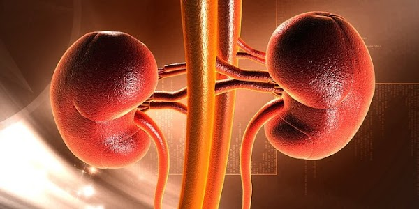 IF YOU WANT KIDNEY TO STAY HEALTHY !!! 4 HABITS YOU SHOULD AVOID TO KNOW ALWAYS HEALTHY