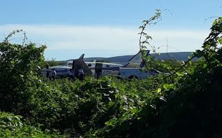 Jumento atingido por avião em Ibotirama é encontrado morto