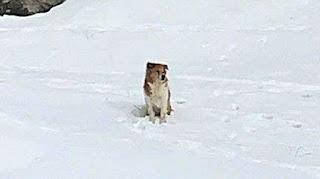 «Я вас жду!» верная собака сидела в сугробе, ожидая хозяев. Она не знала, что о ней забыли