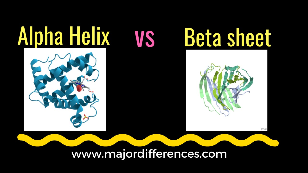 Differences between Alpha Helix and beta-pleated sheet (beta sheet)