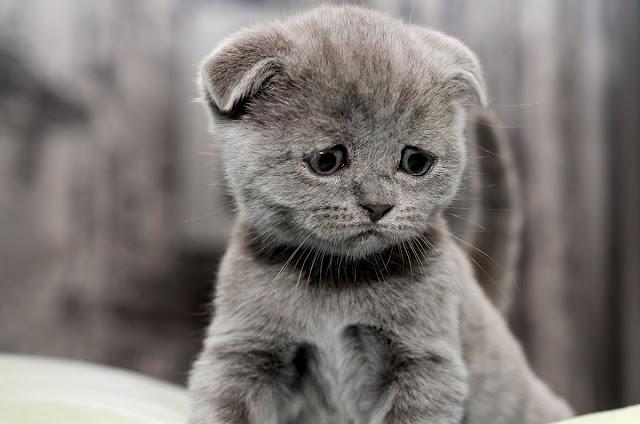 Is Your Cat Sad?