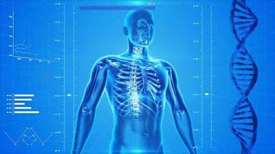 تعرف على وظيفة الجذور الحرة في جسم الإنسان