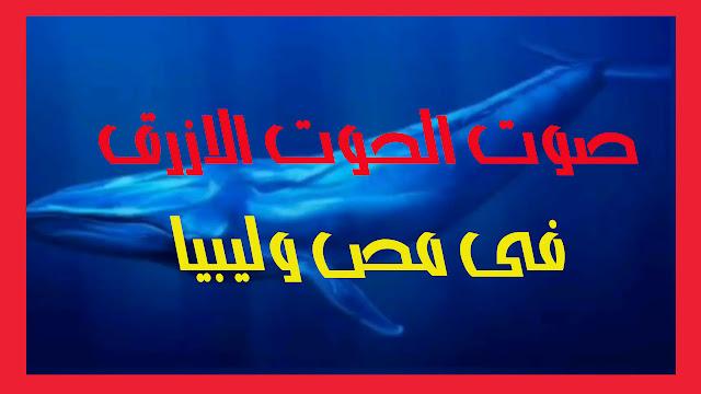 سر سماع صوت الحوت الأزرق على سواحل البحر المتوسط مصر وليبيا .
