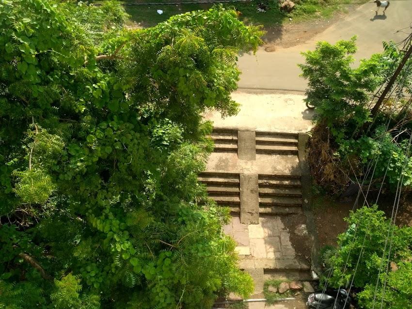 पेड़-पौधे प्रकृति की आत्मा और प्राकृतिक सुंदरता के घर होते  हैं