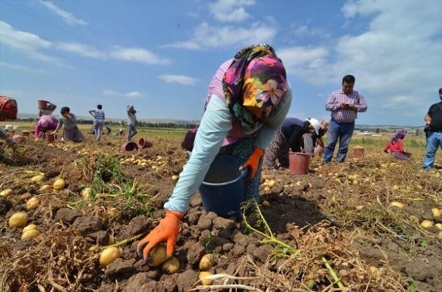 رائدة في إنتاج البطاطس في المغرب ، تطمح Moulouya إلى الترويج لمنتجاتها عالية الجودة