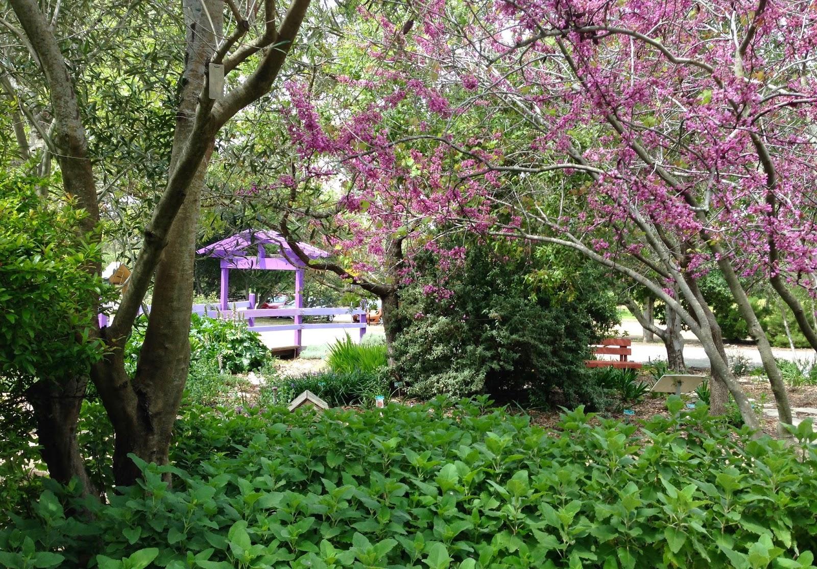 Charmant Birding The San Luis Obispo Botanical Garden