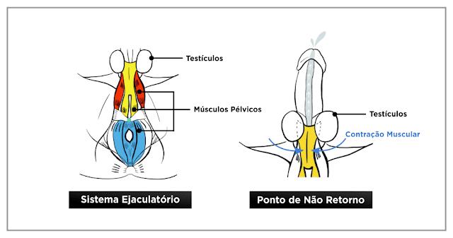 Destruidor de ejaculação precoce guia tratamento completo