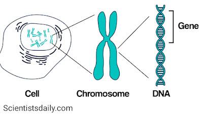 जीन क्या है, इसका क्या भूमिका है | Genes kya hai