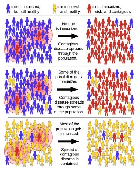 What is Herd immunity and how will it help in fighting against Coronavirus