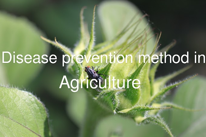 Two disease prevention methods in agriculture