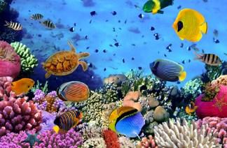 habitat terumbu karang