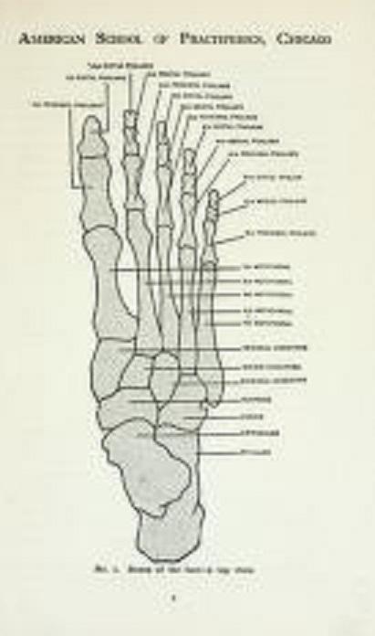 Practipedics  (Podiatry): the science of giving foot comfort